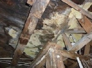 Mold in crawl space atlanta ga solutioingenieria Choice Image