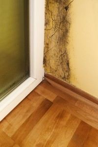 Mold in House Atlanta GA