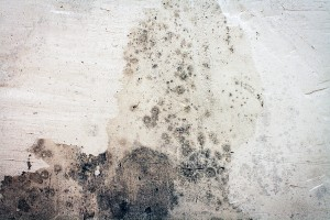 Mold Removal Sandy Springs GA
