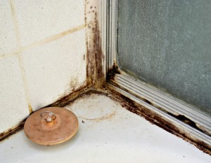 Black Mold Removal Roswell GA