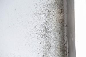 Mold Removal Buckhead GA