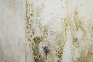 Mold Removal Milton GA