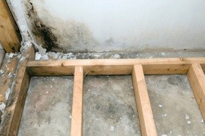 Mold Removal Atlanta GA