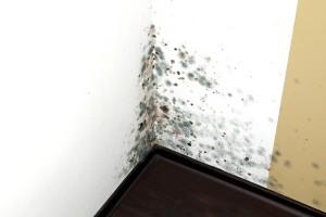 Mold Removal Companies Atlanta GA