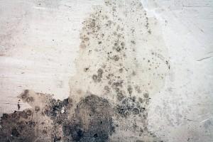 Mold Removal Atlanta GA